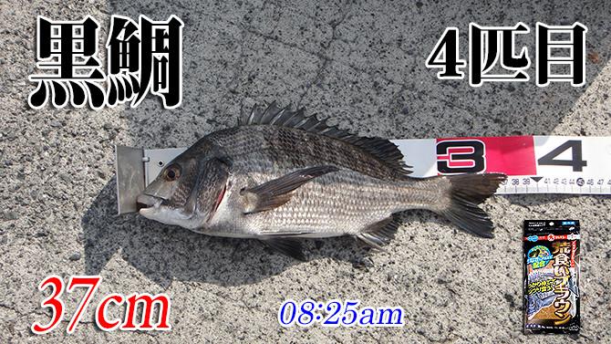 釣果(4)670