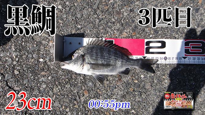 釣果04(黒鯛)670