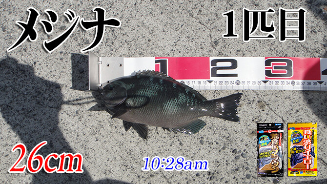 釣果(3)670