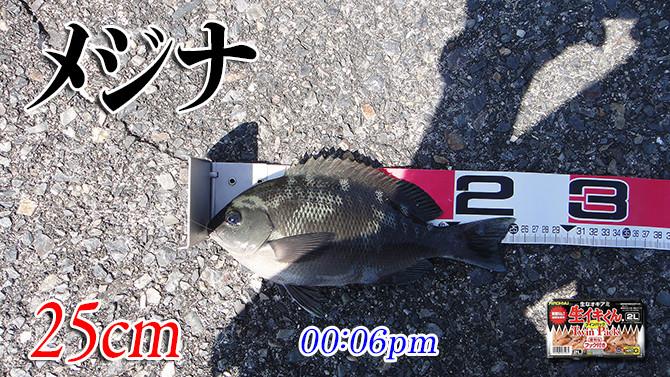 釣果01(メジナ)670