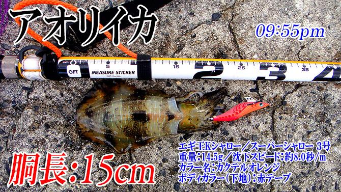 釣果(1)670pix