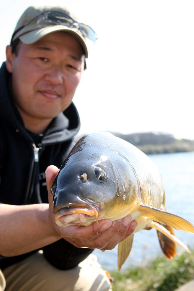 相模川コイ2