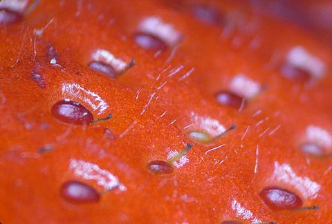 イチゴの表面マクロ撮影