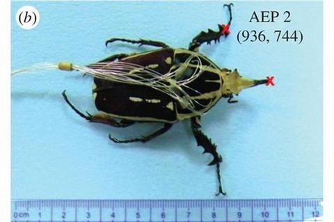 490_虫ロボット