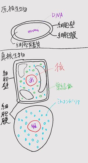 細胞:真核細胞と原核細胞の違い : 高校生物を解説!生物2班