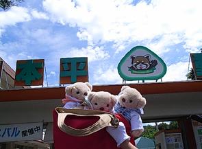 日本平動物園 白クマ