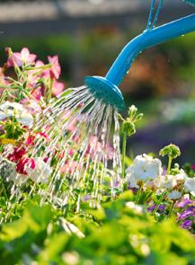 たくさんのお花に水をあげれば・・・