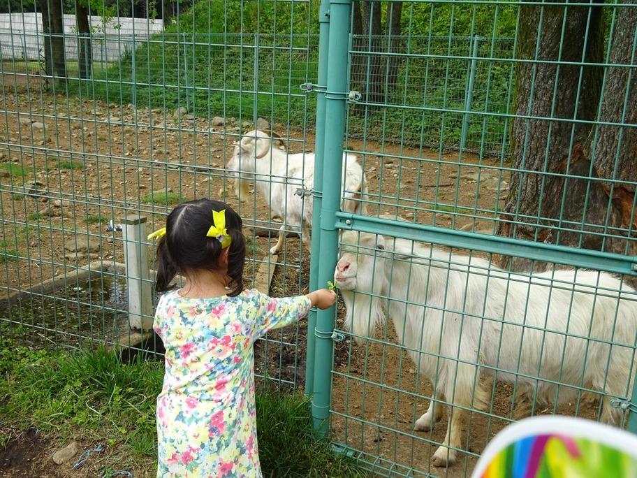 動物公園4