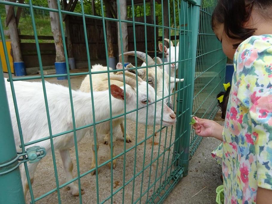 動物公園6