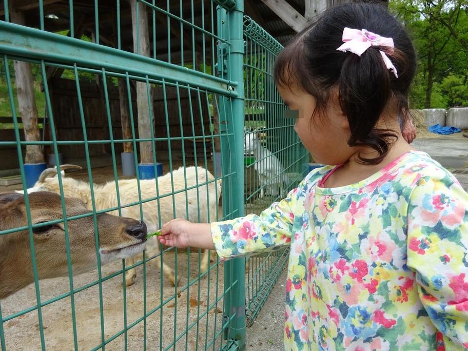 動物公園7