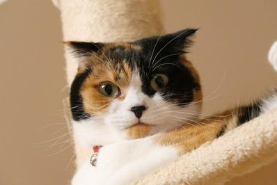 三毛猫マリー2