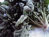 野菜を食べよう vol.5 �