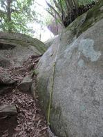 170611大野自然観察の森 (61)