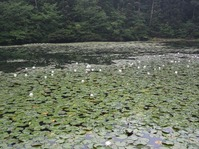 170611大野自然観察の森 (84)