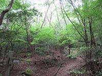 170611大野自然観察の森 (18)