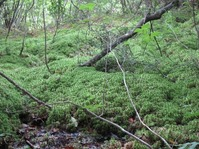 170611大野自然観察の森 (77)