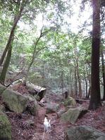 170918宮島弥山 (31)