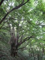 170811大峯山 (59)