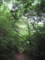 170611大野自然観察の森 (78)