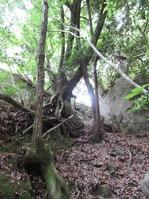 170611大野自然観察の森 (59)