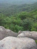 170611大野自然観察の森 (31)