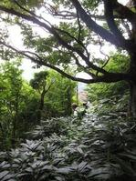170811大峯山 (45)