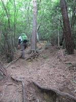 170611大野自然観察の森 (22)