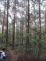 170611大野自然観察の森 (75)