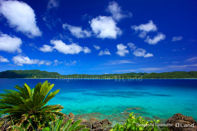 バニラエアの奄美大島便の代表写真