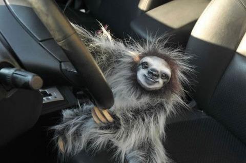 animal_drive