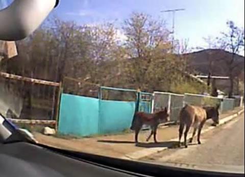 donkey_family
