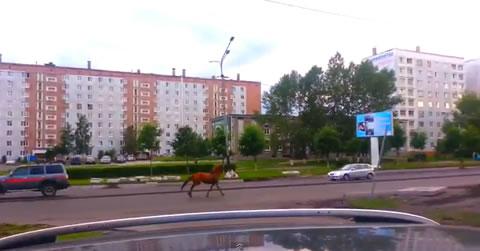 russia_horse