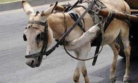 Donkey carriage_s