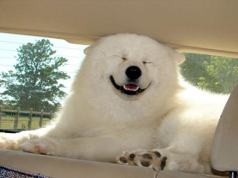 drive_feelgood_dog
