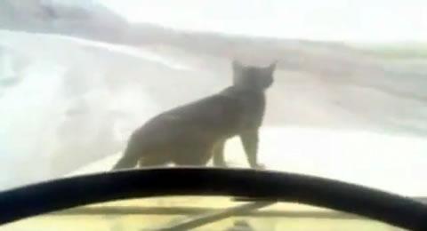 truck_cat