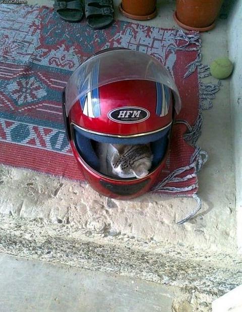 helmet_cat