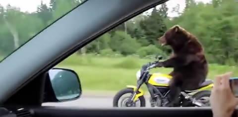 bear_biker