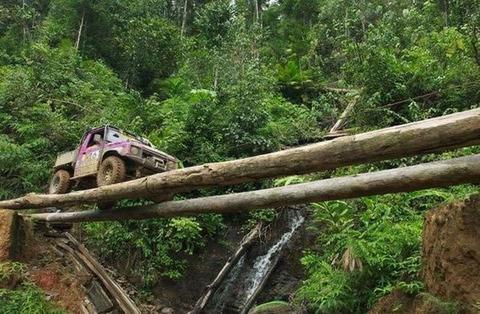wild_treebridge