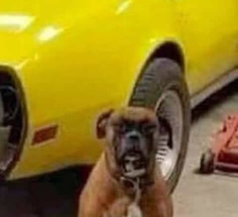 dog_crash_s