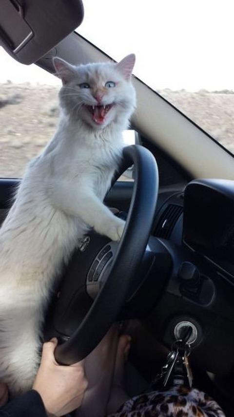 cat_drive