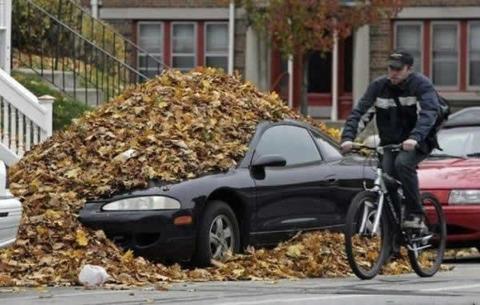 dry_leaves