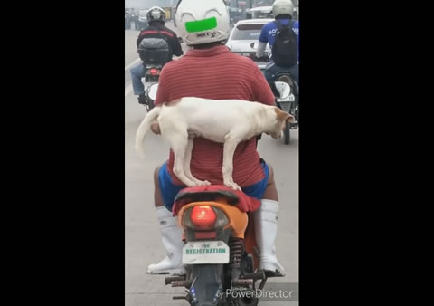 Biker Dangerously Carries Dog