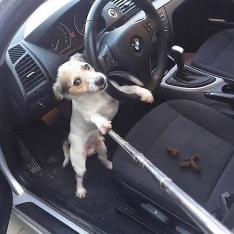 dog_selfie