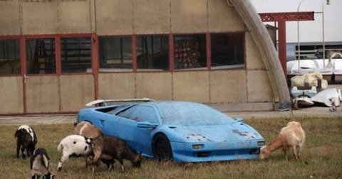 cow_supercar