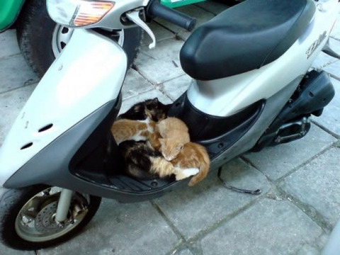 scooter_cat