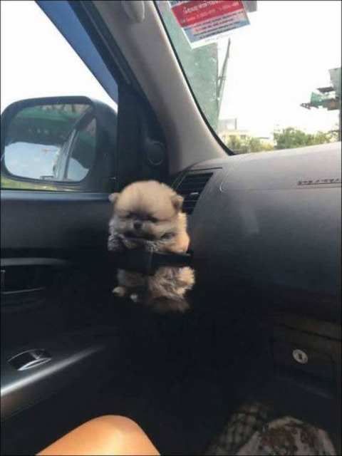 cup_hold_dog