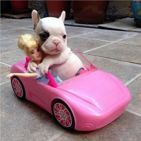 dog_girlfriend