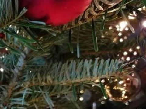 【画像】NGK的クリスマス