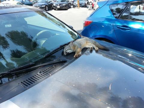 fox_parking