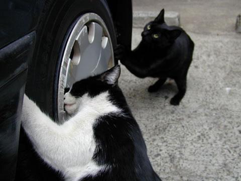 tire-cat01